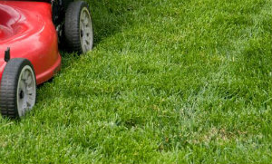 Lawn Mowing Palmers Green