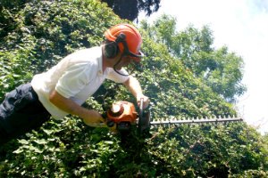 Trimming Hedges in Palmers Green